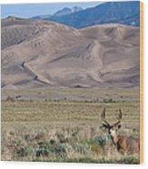 Buck At Great Sand Dunes Wood Print
