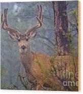 Buck Deer In A Mystical Foggy Forest Scene Wood Print