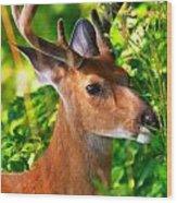 Buck In Velvet Wood Print