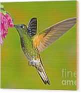 Buff-tailed Coronet Hummingbird Wood Print