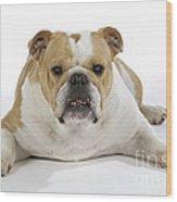 Bulldog, Female Wood Print
