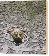 Bullfrog In The Mud Wood Print