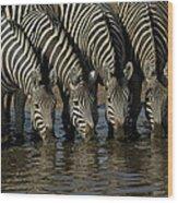Burchells Zebra Equus Burchellii Herd Wood Print