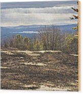 Burnt Blueberry Field In Maine Wood Print