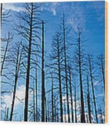Burnt Pine Trees In A Forest, Grand Wood Print