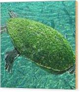 Busch Turtle  Wood Print
