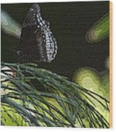 Butterfly Collection Wood Print