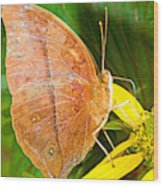 Butterfly Mimicry Wood Print
