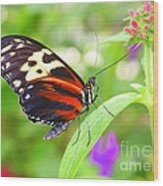 Butterfly On Bush Wood Print