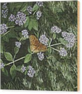 Butterfly On Oregano Wood Print