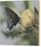 Butterfly On Thistle Wood Print
