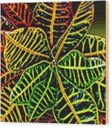 Cadiaeum Crotons Tropical Houseplant Shrub Wood Print