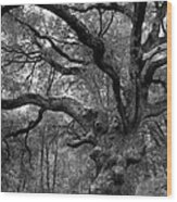 California Black Oak Tree Wood Print