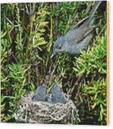 California Gnatcatcher Wood Print