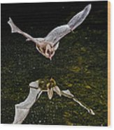 California Leaf-nosed Bat At Pond Wood Print