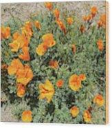 Californian Poppy Eschscholzia Wood Print
