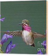 Calliope Hummingbird Stellula Calliope Wood Print