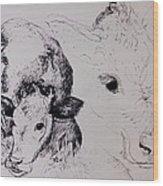 Calves, Gt Garnetts II Pen & Ink On Paper Wood Print