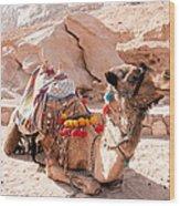 Sitting Camel Wood Print
