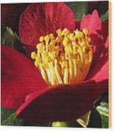 Camellia Flower Wood Print by Joyce Woodhouse