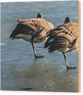 Canada Geese At Rest Wood Print