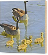 Canadian Goose Family Wood Print