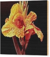 Canna Lilly In New Orleans Wood Print
