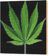 Cannabis Leaf On A Black Background Wood Print