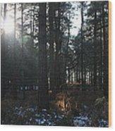 Cannock Chase Wood Print