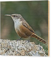 Canyon Wren Wood Print