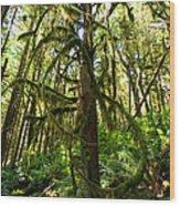 Capilano River Canyon 10 Wood Print by Terry Elniski