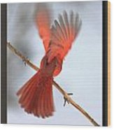 Cardinal Launch Wood Print
