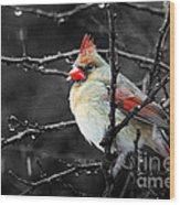 Cardinal On A Rainy Day Wood Print