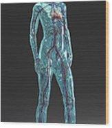 Cardiovascular System Female Wood Print