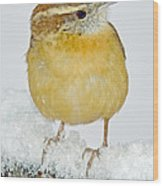 Carolina Wren In Winter Wood Print