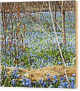Carpet Of Blue Flowers In Spring Forest Wood Print