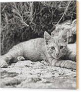 Cat And Lavender  Wood Print
