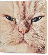 Cat Face Close Up Portrait Wood Print