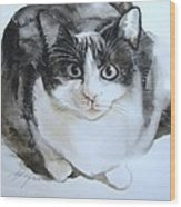 Cat In Black And White  Wood Print