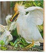 Cattle Egret With Young In Nest Wood Print