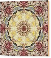 Cecropia Sun 4 Wood Print