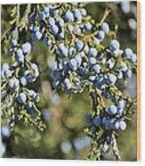 Cedar Blue Wood Print