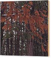 Cedar Wood Print