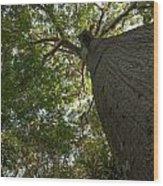 Ceiba Tree Wood Print