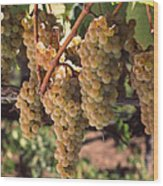 Chardonnay Grapes In Vineyard, Carneros Wood Print