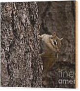 Cheeky Chipmunk Wood Print