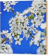 Cherry Blossom With Blue Sky Wood Print