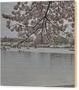 Cherry Blossoms - Washington Dc - 011336 Wood Print