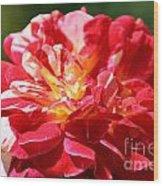 Cherry Petals Wood Print