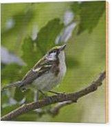 Chesnutsided Warbler Wood Print